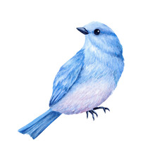 Cute Little Blue Bird. Watercolor Illustration. Cute Animals And Birds. Spring Symbol. Happy Easter. Blue Luck Bird
