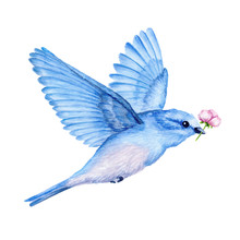 Cute Little Blue Bird. Waterco...