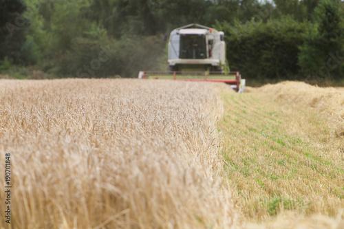 Fotografia  combiner and crops