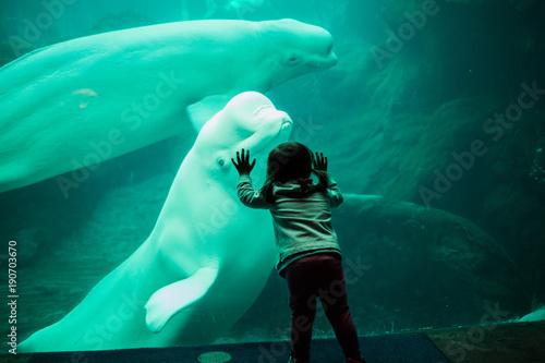 Fotografía Little child staring at beluga whale through glass at aquarium.