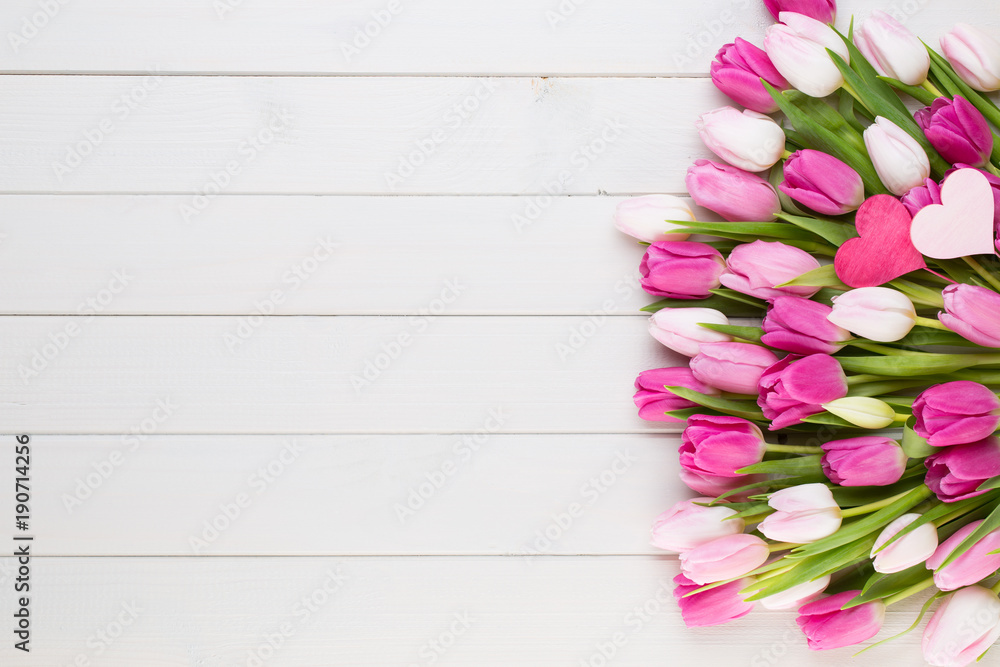 Fotografie, Obraz Pink tulip on the white background. Easter background.