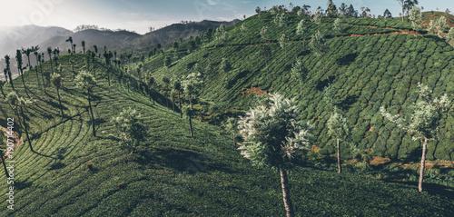 Fotoposter Khaki Tee Plantage von oben