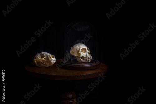 Obraz na plátne  Skull Collector Oddities