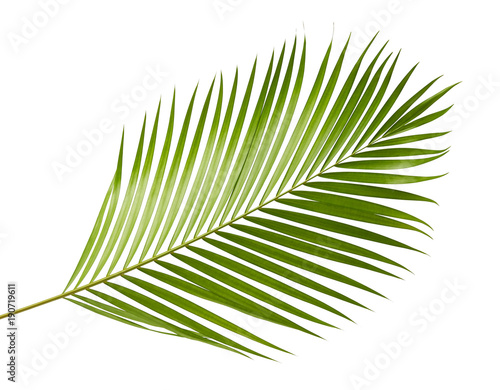 Yellow palm leaves (Dypsis lutescens) or Golden cane palm, Areca palm leaves, Tropical foliage isolated on white background with clipping path Wall mural