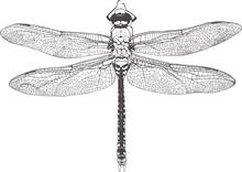 Dragonfly Graphic Realistic Li...