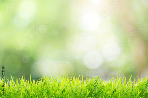 Keuken foto achterwand Lente Natural green background with spring or summer