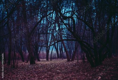 Fotografia Fantasy magical forest