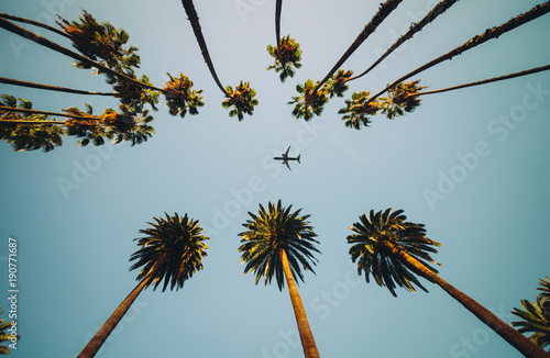 Foto op Canvas Palm boom View of palm trees, sky and aircraft flying