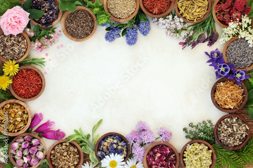 Fototapeta Medicinal herb and flower border with fresh and dried herbs and flowers used in natural herbal medicine and homoeopathic remedies on parchment paper background. obraz