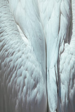 White Tender Feather Close Up Angel Wings Can Be Used As Background