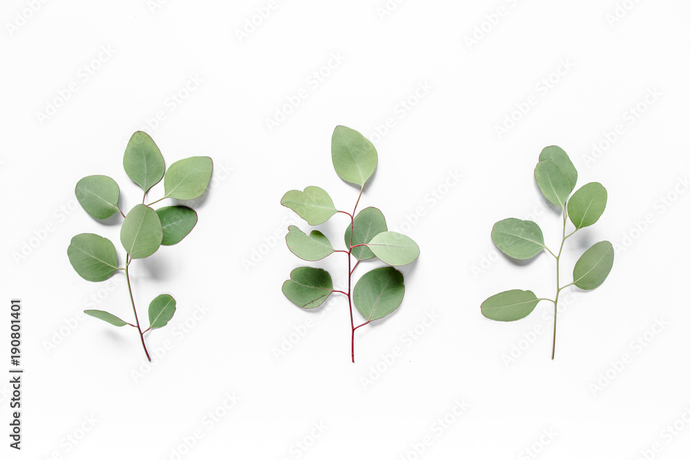 Fototapeta Green leaves eucalyptus populus on white background. Flat lay, top view Green leaf texture. Nature concept.