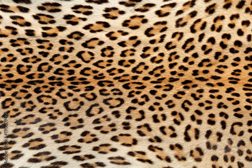 Deurstickers Luipaard Close-up view of the skin of a leopard (Panthera pardus).
