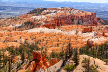 Trees And Plants From Bryce Ca...