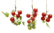 Isolated Cherry Tomatos On The...
