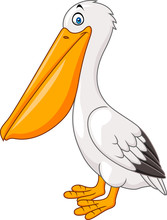 Cartoon Pelican Isolated On Wh...