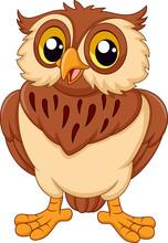 Cartoon Owl Isolated On White Background