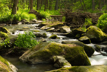 Small Mountain Wild River In S...