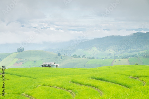 In de dag Lime groen Rice terraces on a mountain, and there is a hut in the middle of the rice fields