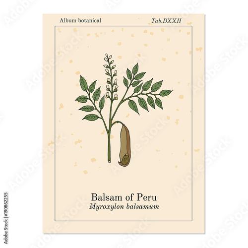 Photo Balsam of Peru Myroxylon balsamum , medicinal plant