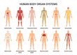 Human Body Organ Systems Poster