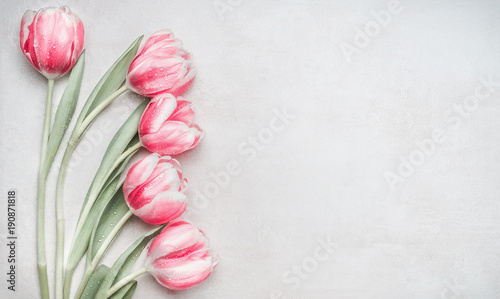 Fotobehang Tulp Lovely pastel pink tulips bunch, floral border at light background, top view. Layout for springtime holidays. Mother day greeting card