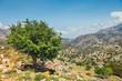 Olive fields on Crete Island in Greece, Cretan landscape