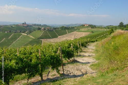 Fotobehang Wijngaard A view of vineyards in the Langhe, Piedmont - Italy