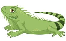 Cute Detailed Pet Iguana Cartoon Style Vector Illustration Isolated On White