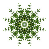 Abstract green background flora mandala pattern, wild climbing vine liana plant with kaleidoscope effect on white background. - 190908699