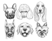 Different Dog Breeds Portraits