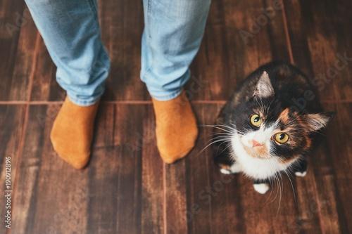 Keuken foto achterwand Kat Man and cute cat