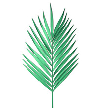 Tropical Palm Leaf Isolated On...