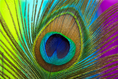 Deurstickers Pauw Peacock color feather