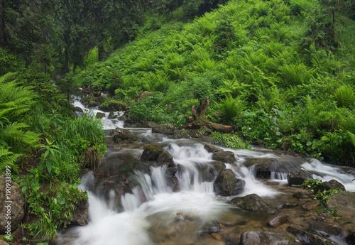 szybka-rzeka-w-lato-lesie-piekny-naturalny-krajobraz-w-okresie-letnim