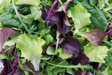 Fresh Salad Of Mixed Greens, M...