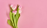 Fototapeta Tulipany - Valentines day background with pink tulips over pink background. Space for text