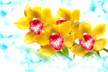 Fototapeta Orchid flower close up