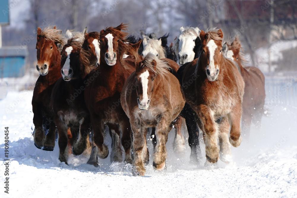 Fototapety, obrazy: Koński bieg na śnieżnym polu