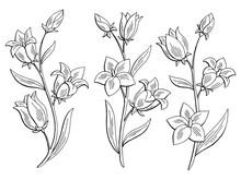 Bluebell Flower Graphic Black ...
