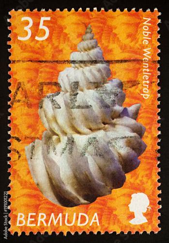 Fotografia  Noble Wentletrap on postage stamp