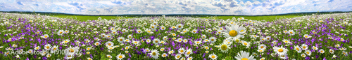 Fotobehang Pistache spring landscape panorama with flowering flowers on meadow