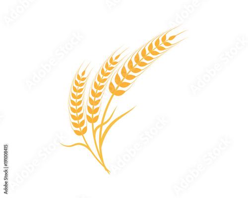 Cuadros en Lienzo Agriculture wheat Logo Template