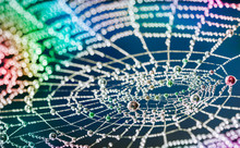 Close-up Of Beautiful Colorful Cobweb With Pearls From Water Droplets. Multicolored Texture Of The Spider Web With Glittering Rain Drops On A Night Background And Bokeh.