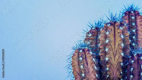 Modny neon fioletowy i niebieski kolor tła minimalne z roślin kaktusa. Kaktusowy rośliny zakończenie up. Koncepcja stylu kaktusów mody.