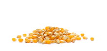 Yellow Grain Corn Isolated On White Background, For Popcorn