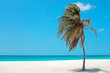 Palmtree in the wind on Aruba island in the Caribbean Sea