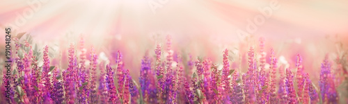 Spoed Foto op Canvas Weide, Moeras Selective and soft focus on purple flowers in meadow in spring - springtime