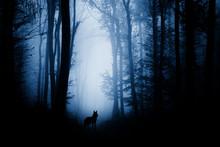 Wolf Silhouette In Dark Fantas...