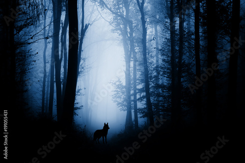 Door stickers Wolf wolf silhouette in dark fantasy forest