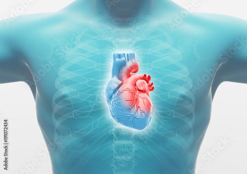 Photo  Torace di uomo con cuore, anatomia render 3d